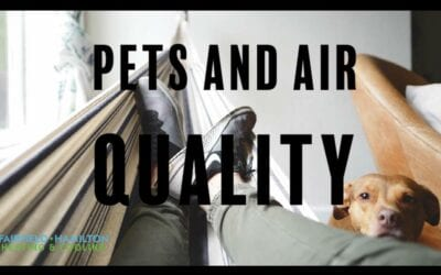 Pet Owners: How to Keep Pets and Keep Healthy Air Quality